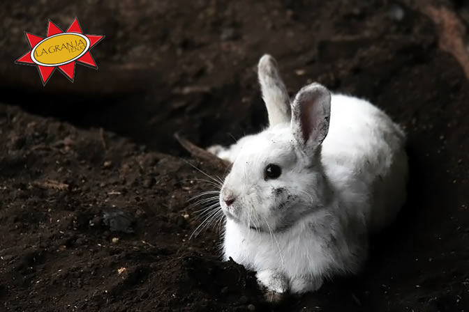 Conejo - El Señor Progreso